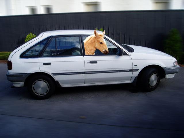 horse incar