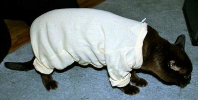 Cat in a jumpsuit